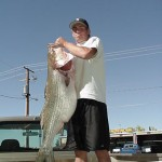 47# Striper found dead-floating on Lake Powel