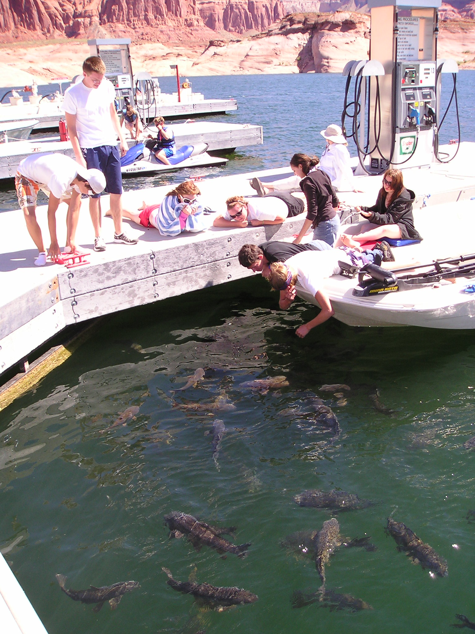 Lake powell information and facts about fish and fishing for Best fishing in arizona